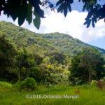 Vista desde el lugar de la entrevista en Siembra Tres Vidas, Aibonito, PR